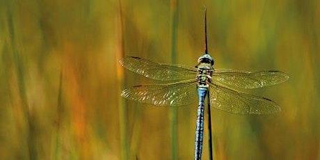 Dragonflies & Damselflies tickets