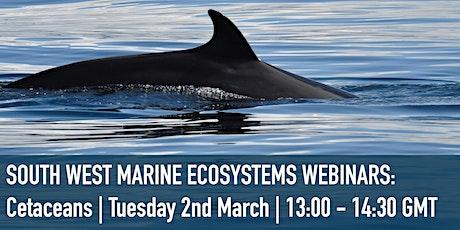 SWME Cetaceans Webinar tickets