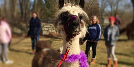 Hike with Llamas tickets