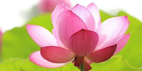 Yoga y meditación entradas