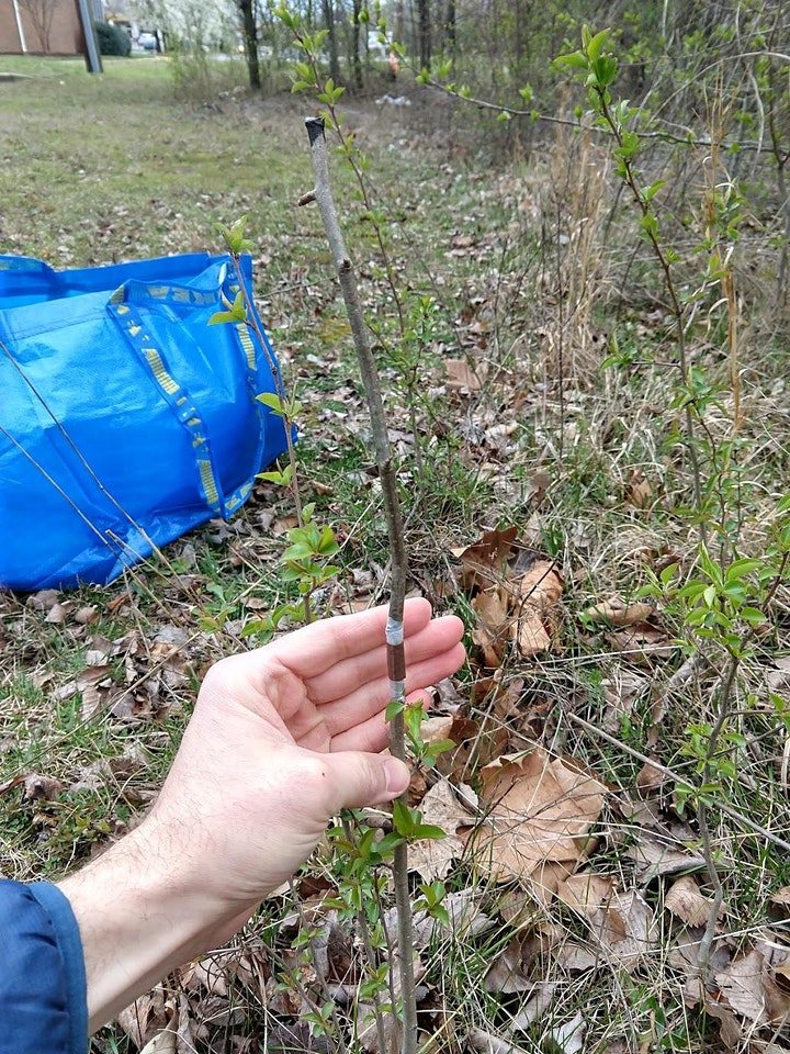 Fruit Tree Pruning and Grafting: with Taylor Roman image