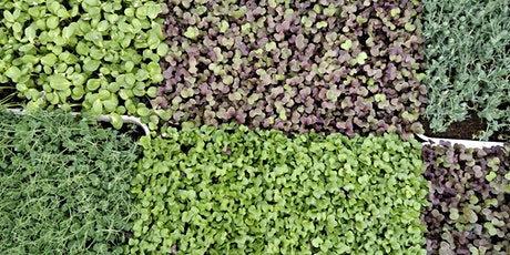 Growing Microgreens at Home tickets