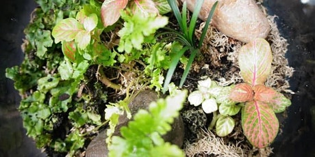 Terramore Does Glebe Markets - Terrariums, Plants and all things green tickets