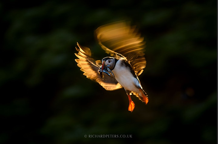 An evening with wildlife photographer Richard Peters image
