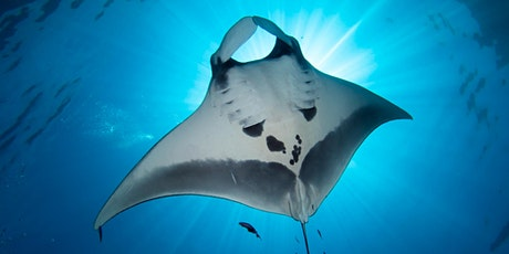 Microplastics and Manta Rays: Habitats, Pollution, and How to Help tickets