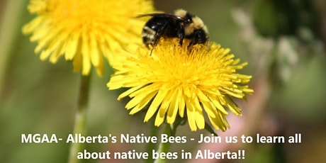 MGAA- Alberta's Native Bees - Learn all about Native Bees in Alberta tickets