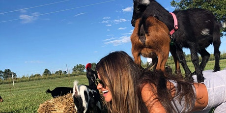 Goat Yoga at Adam Puchta Winery - Herman, MO tickets