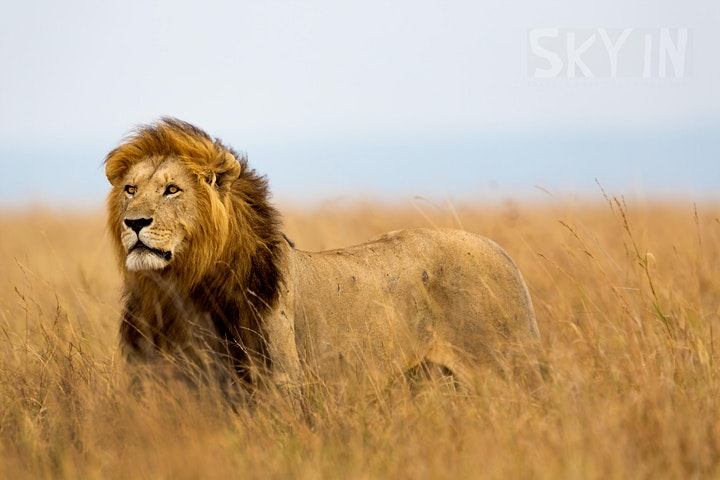 Kenya Culture and Wildlife - Explore with SKYIN image