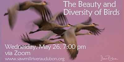 Beauty and Diversity of Birds: Ilana Block Photography, Wed May 26, 7:00 pm