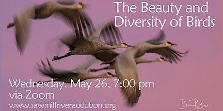 Beauty and Diversity of Birds: Ilana Block Photography, Wed May 26, 7:00 pm tickets