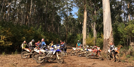 Hills & Flow | Trail Bike Day Tour tickets
