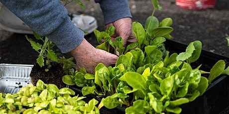 Seed saving and propagation 101 with Kat Lavers tickets