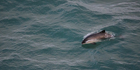 Threats to Harbour Porpoise in UK Waters (re-run) tickets