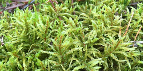 Around Britain in 30 bryophytes ONLINE tickets