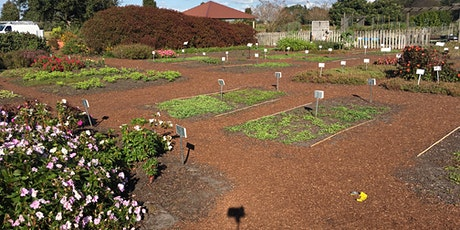 Guided Garden Tour: In-person event tickets