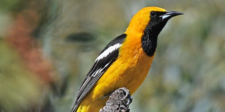 Sunbelt Spotlight: Southern CA Birds, Residents & Visitors | Wendy Esterly tickets