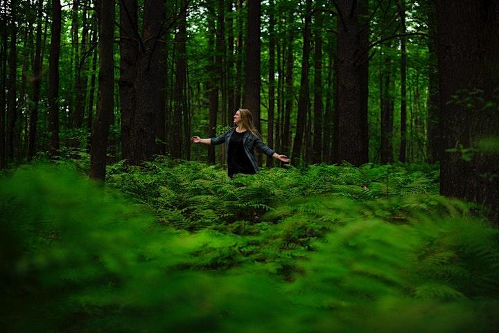 Forest Bathing & Winter Meditation Retreat image