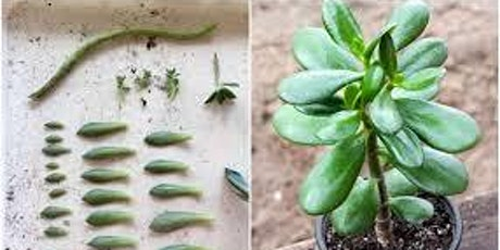 Succulent Propagation Workshop tickets