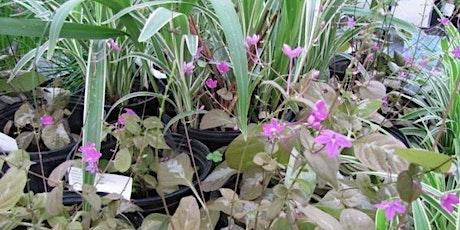 Master Gardener Volunteer Spring Plant Sale tickets