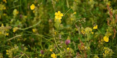Wild About Wildflowers: Wildflower ID Walk tickets