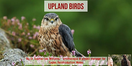 Upland Birds tickets