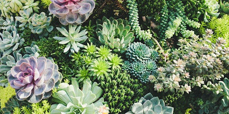 The Succulent Planting Class at Pure Bean tickets