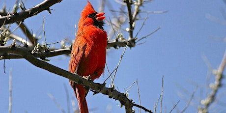 Birding by Ear- a Beginner's Guide to Bird Songs, Calls, and Commotion tickets