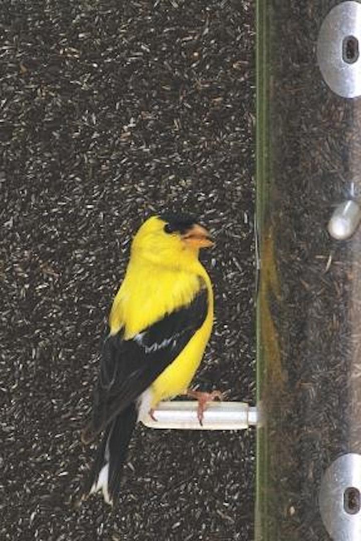 JCWA Bird Seed Sale image