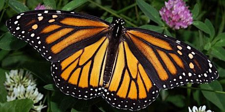 Butterfly Gardening - Webinar tickets
