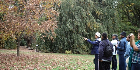 Tree Identification tickets