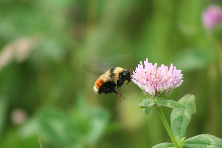 Wild About Bees - Kick Off image