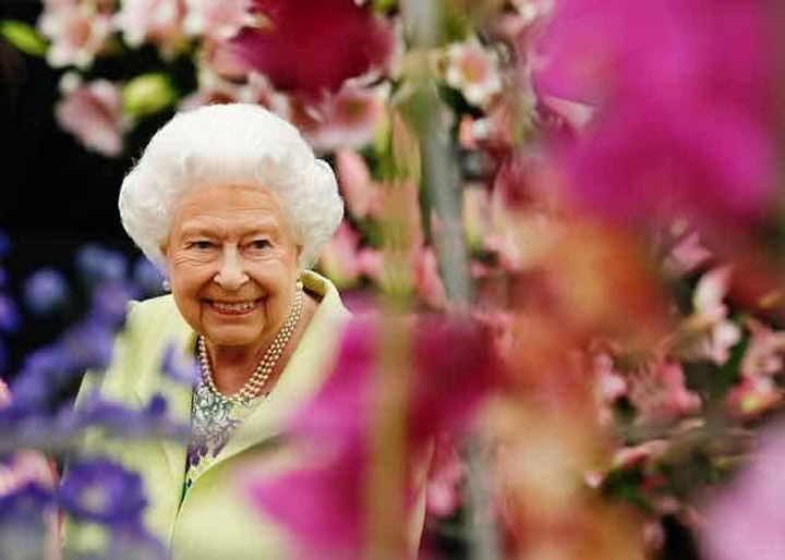 A Royal Sip 'N Bloom image