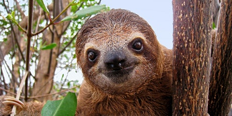 Sloth Craft tickets