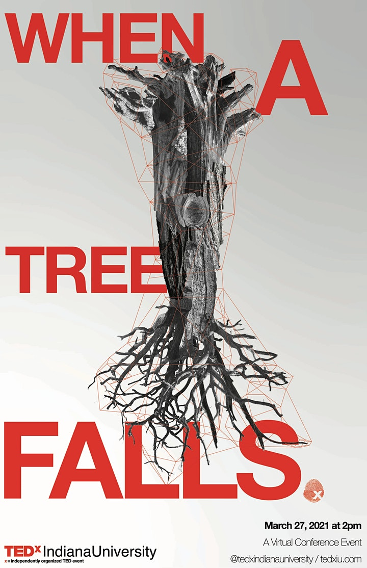 When A Tree Falls image