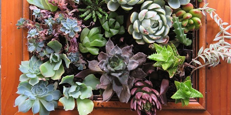 Seniors Week Succulent Frames Workshop tickets