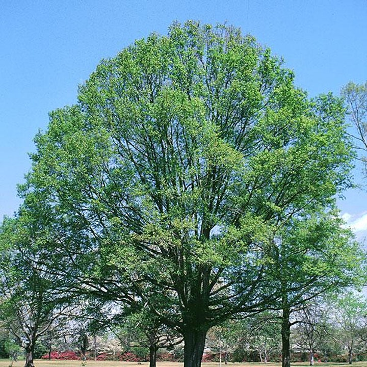 Free Tree Giveway from 1 pm -4 p.m. on April 10 image