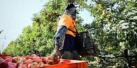 2021 Autumn Future Orchards® Walk - Orange tickets