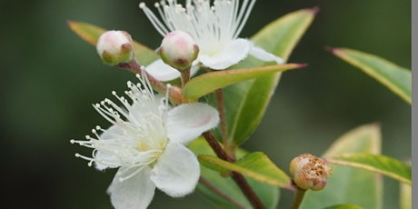"Guided Walk - ""Edible Native Plants"" tickets"