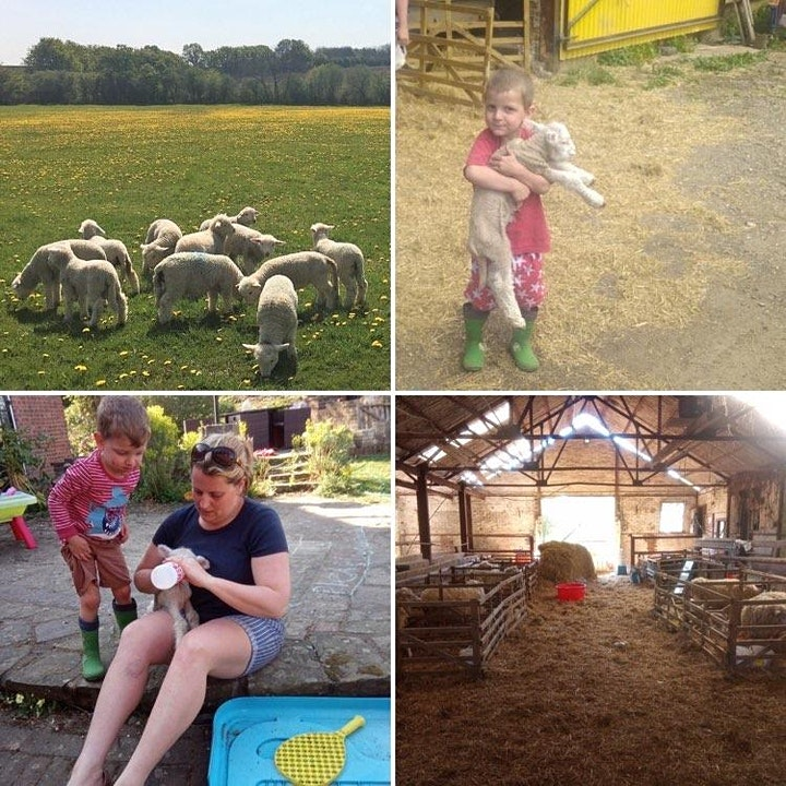 SheepLife; a fun family day out at lambing time on our farm image