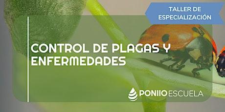 Control de Plagas y Enfermedades entradas