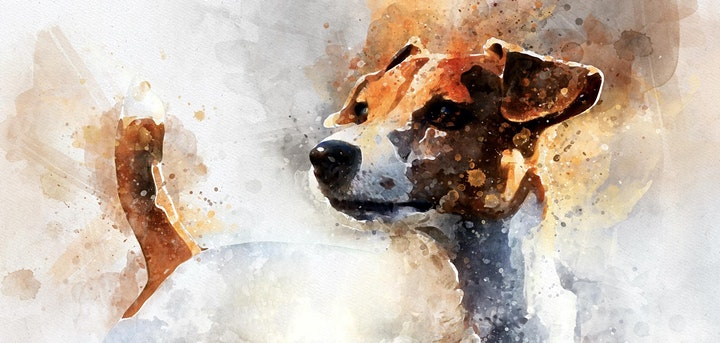 Animal Portrait Competition | $200 First Prize image