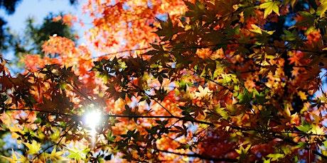 Seasonal Listening-Body Intelligence: Autumn: Metal Element tickets