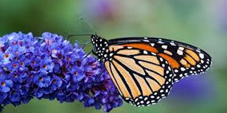 Butterfly Wonderland Spring Plant Sale Member-only Evening tickets
