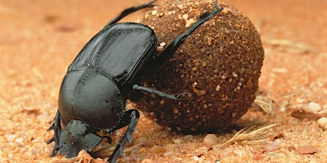 Dung Beetle Workshop tickets