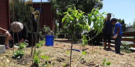 Vacaville Demonstration Food Forest Installation:  Day 1 of 2 tickets