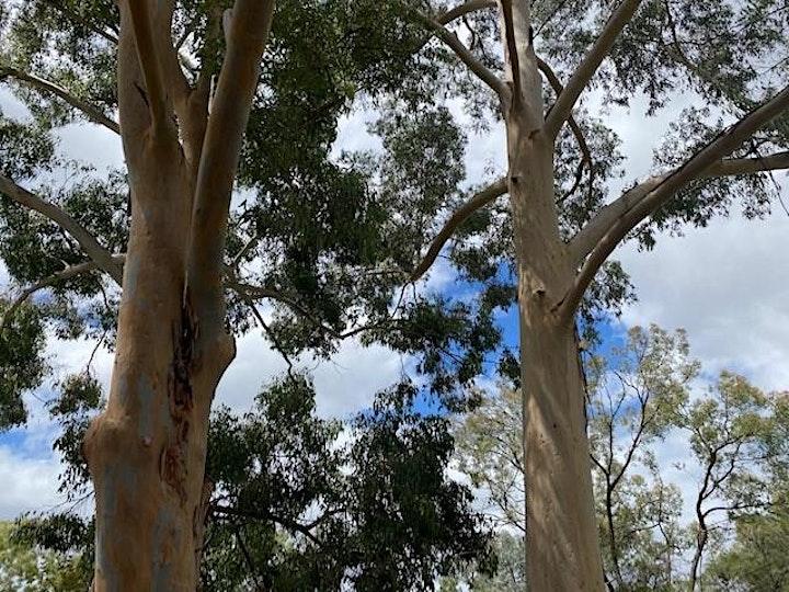 Tour the Trees image