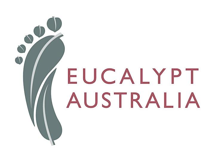 Eucalyptus Forest Therapy Walk- Tasmanian Arboretum image