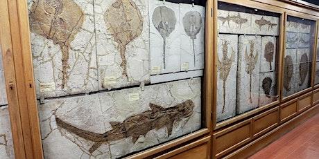 Apertura e visite guidate al Museo di Geologia e Paleontologia biglietti