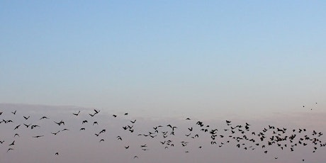 ONLINE TALK: The Conference of the Birds with RSPB Chief Exec Beccy Speight tickets