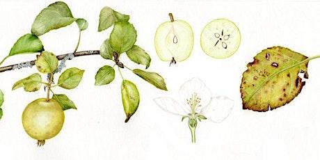 Botanical Illustration tickets